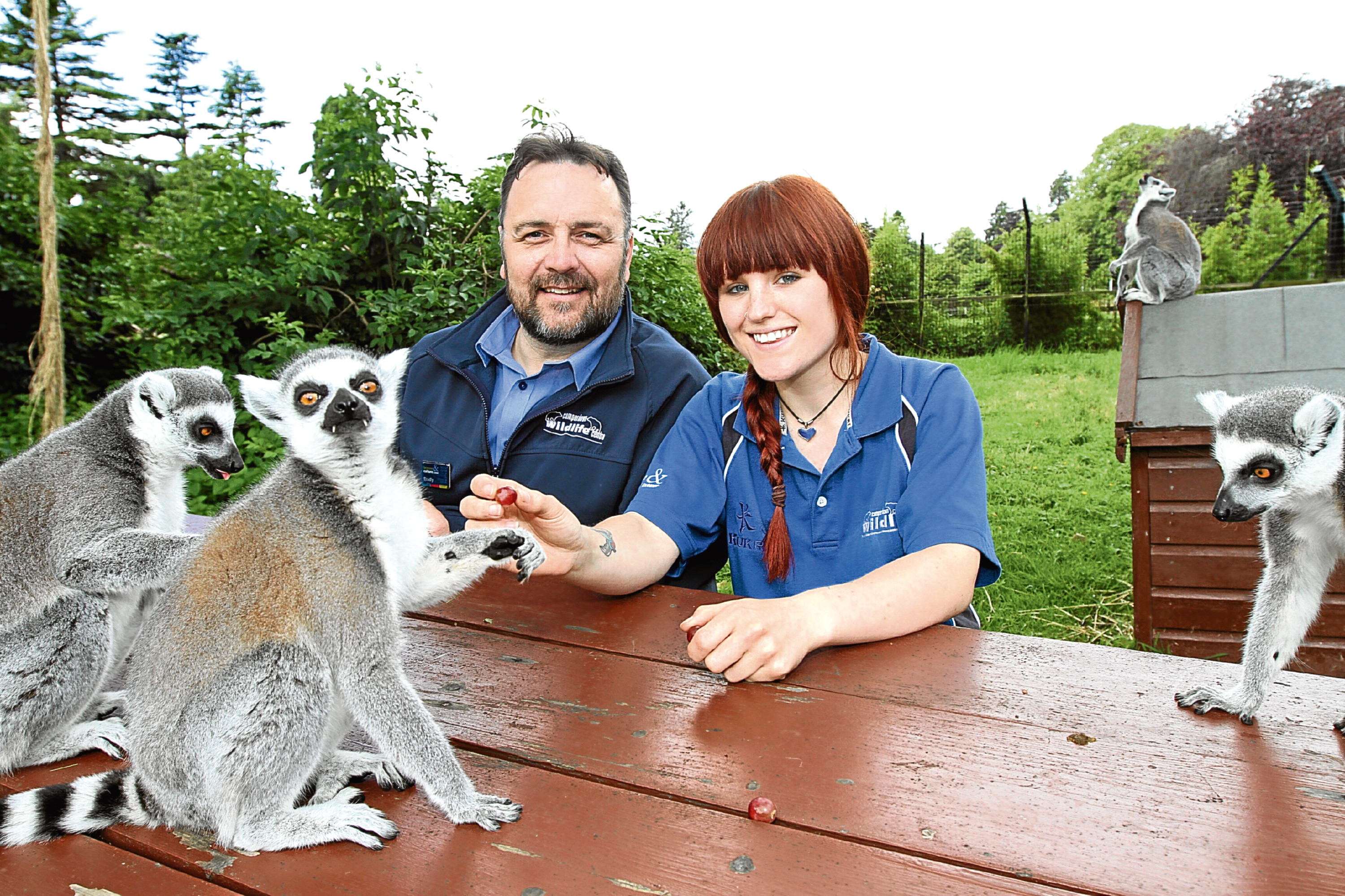 There's free entry at Camperdown Wildlife Park. Bradly Yule and zookeeper Hannah Colgan feed the ringtail lemurs.
