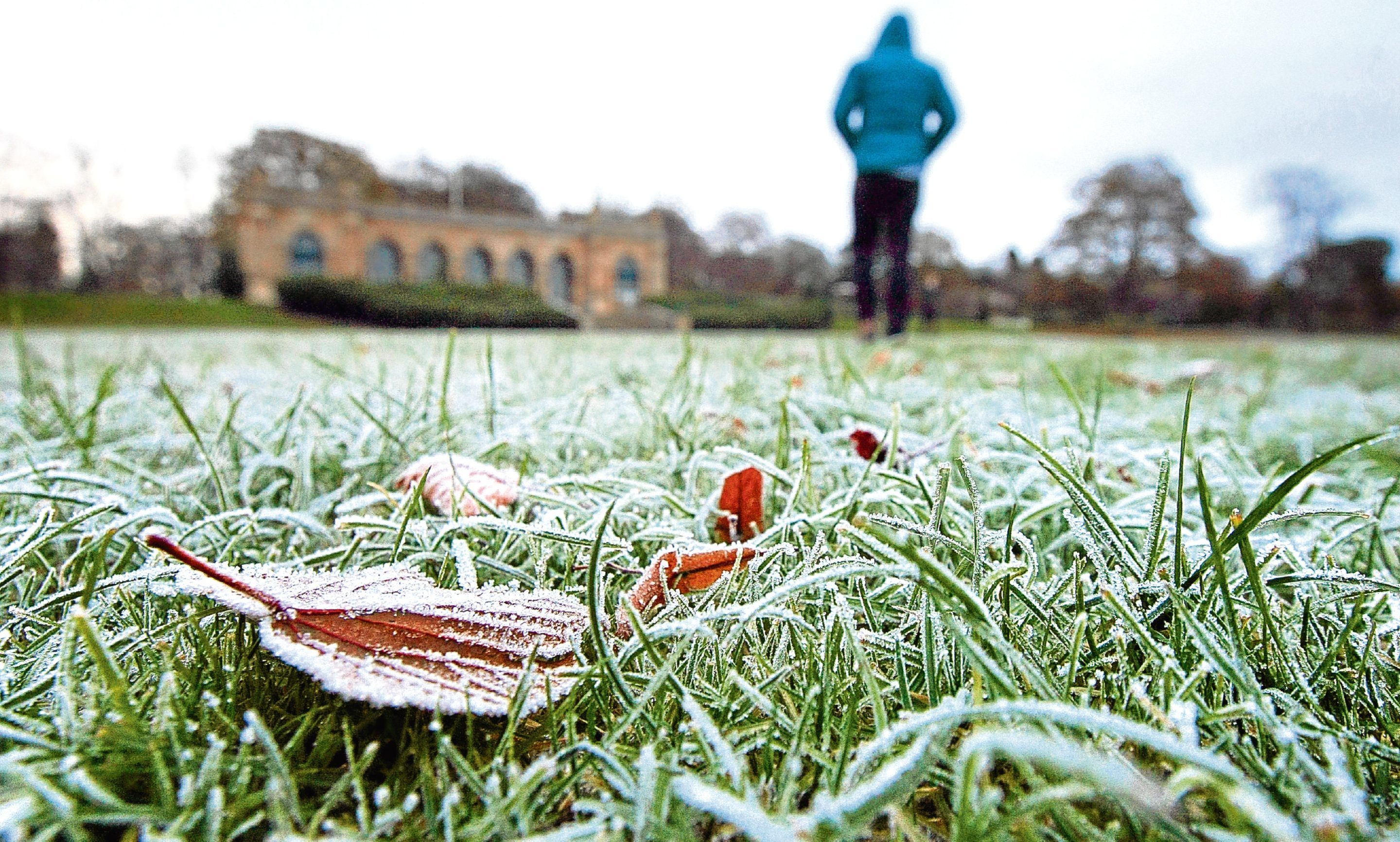 Frost covers the grass in Baxter Park.