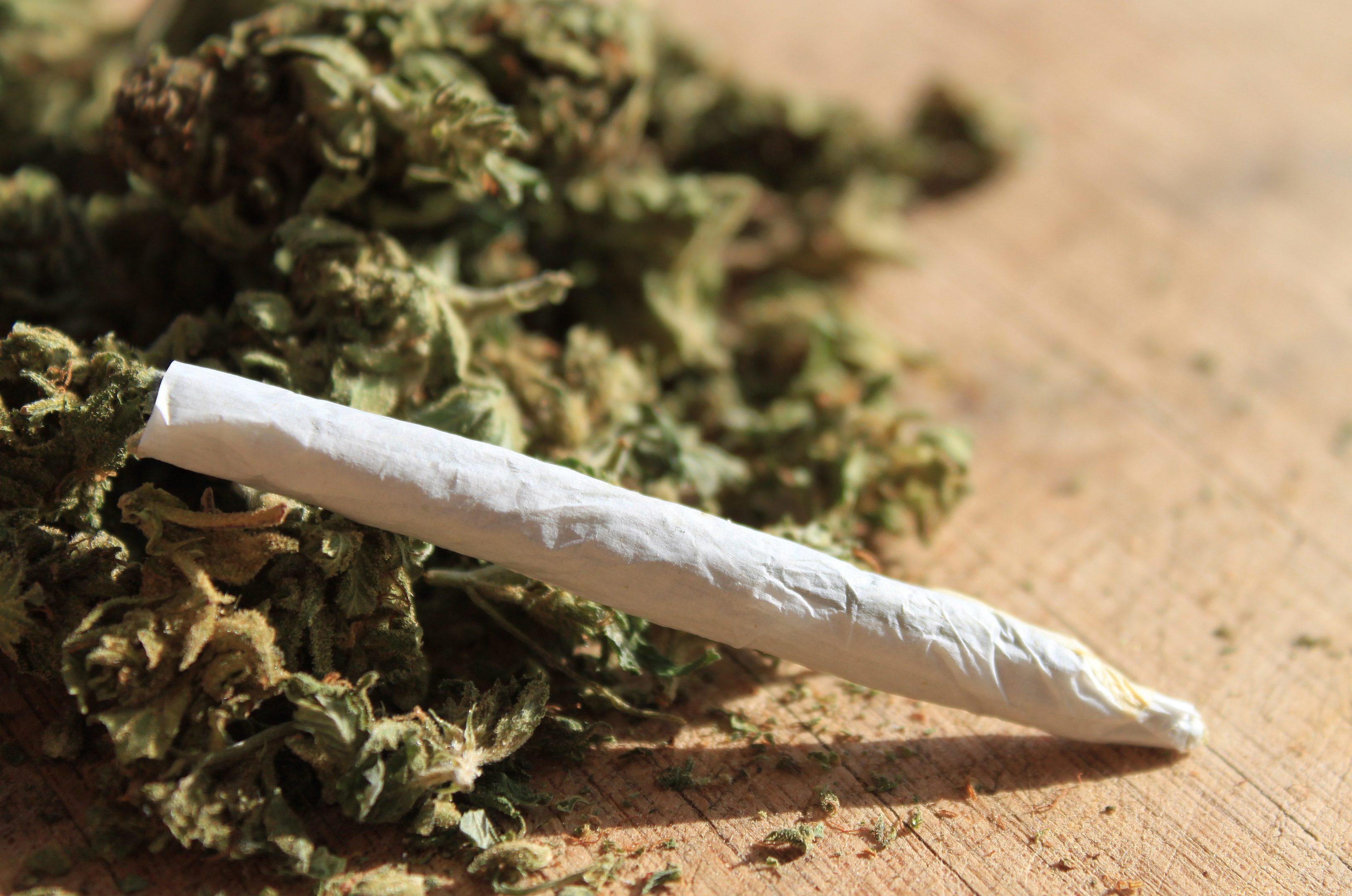 Cannabis (stock image)