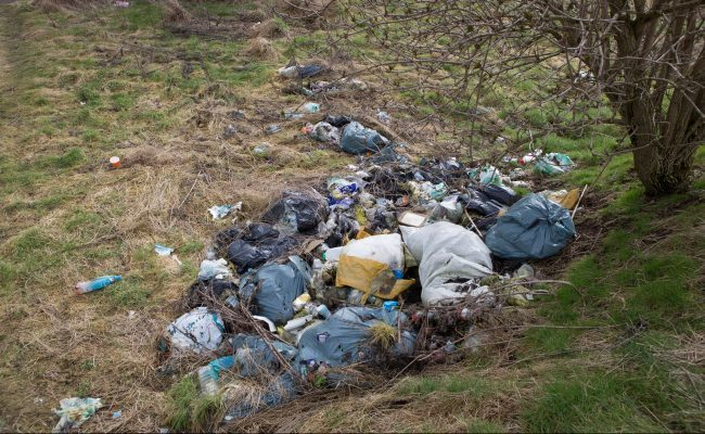 Camperdown park rubbish