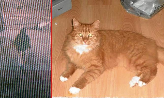 CCTV footage captured by Cats Protection shows a person walking away from the facility and Sandy the cat