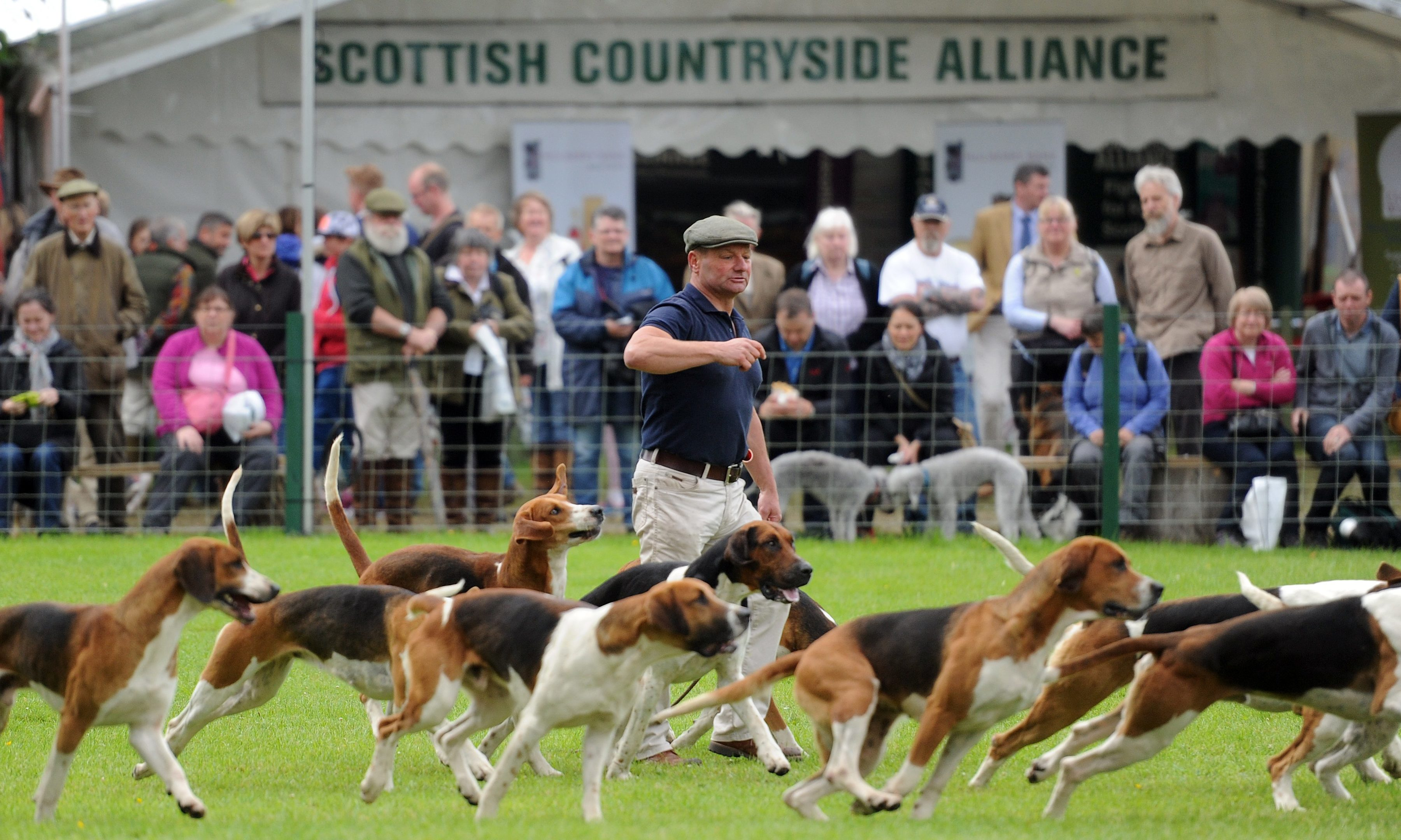 A display by the Fife Foxhounds at last year's Scottish Game Fair