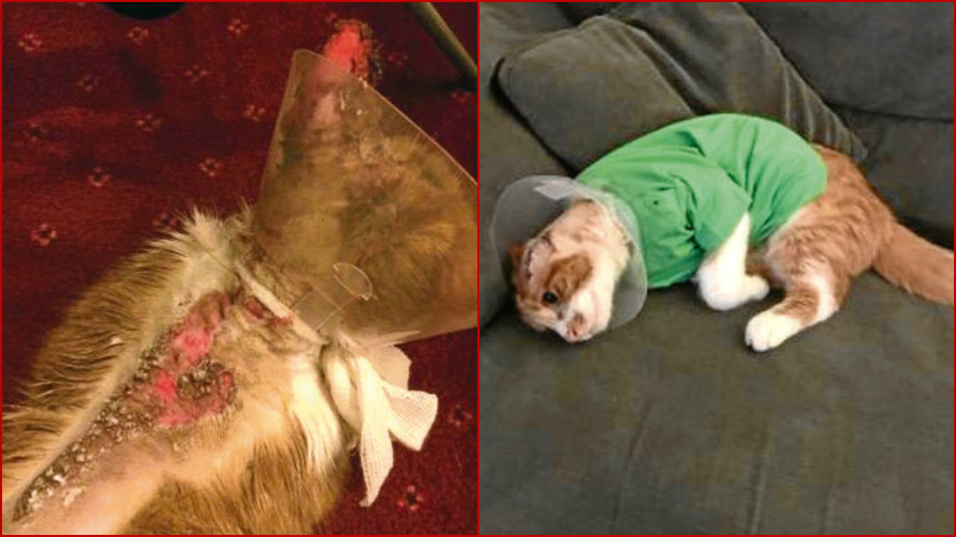 Jasper is recovering at home after being burned by a corrosive liquid.