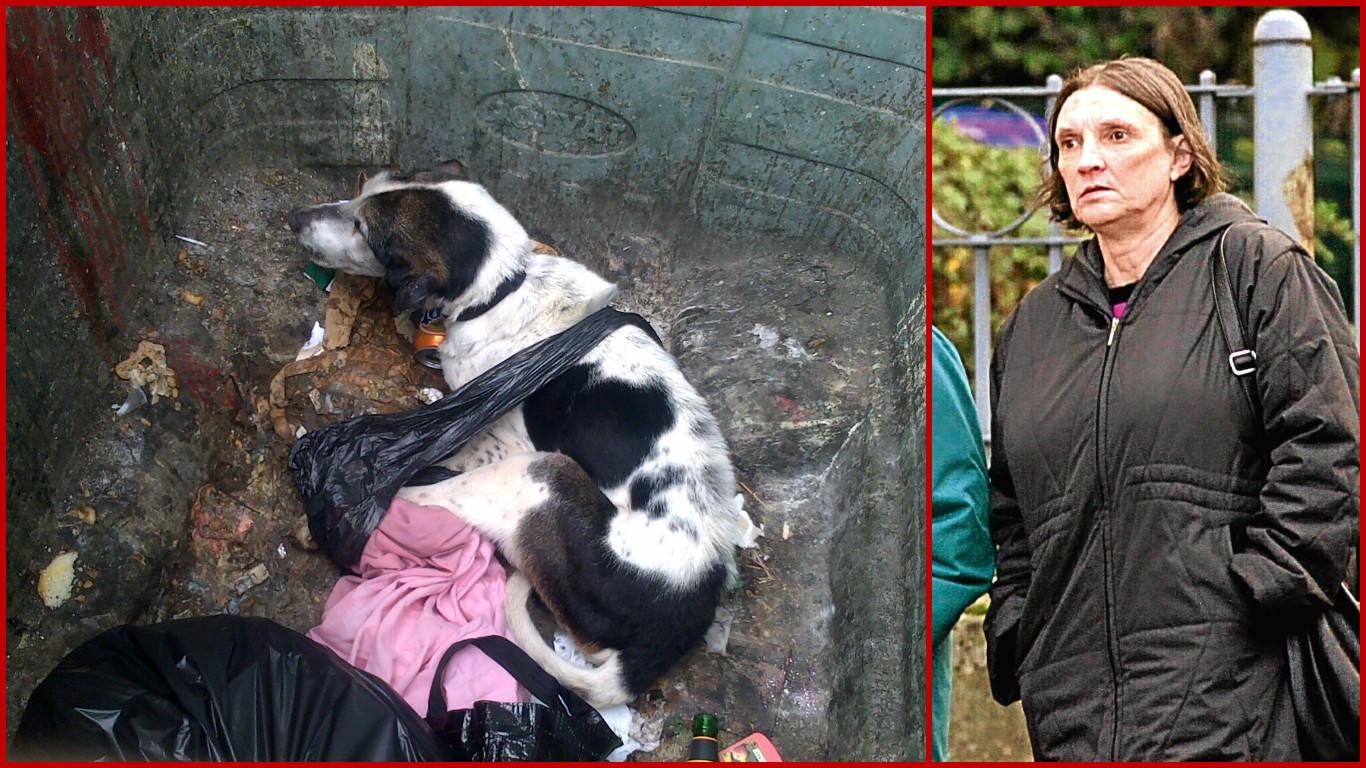Heather Stott abandoned Dougall the dog in an industrial bin. He later had to be put down by a vet.