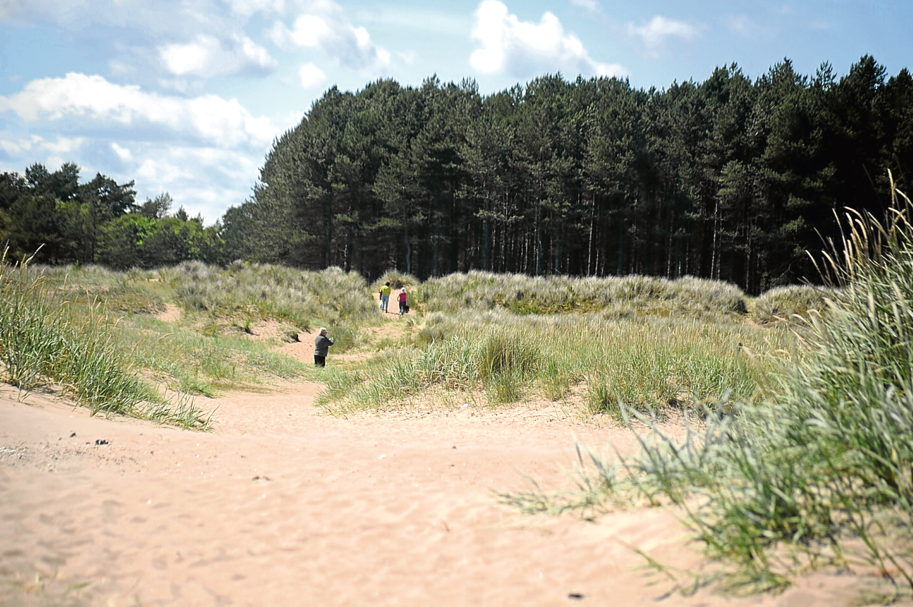 The beach at Tentsmuir (stock image)
