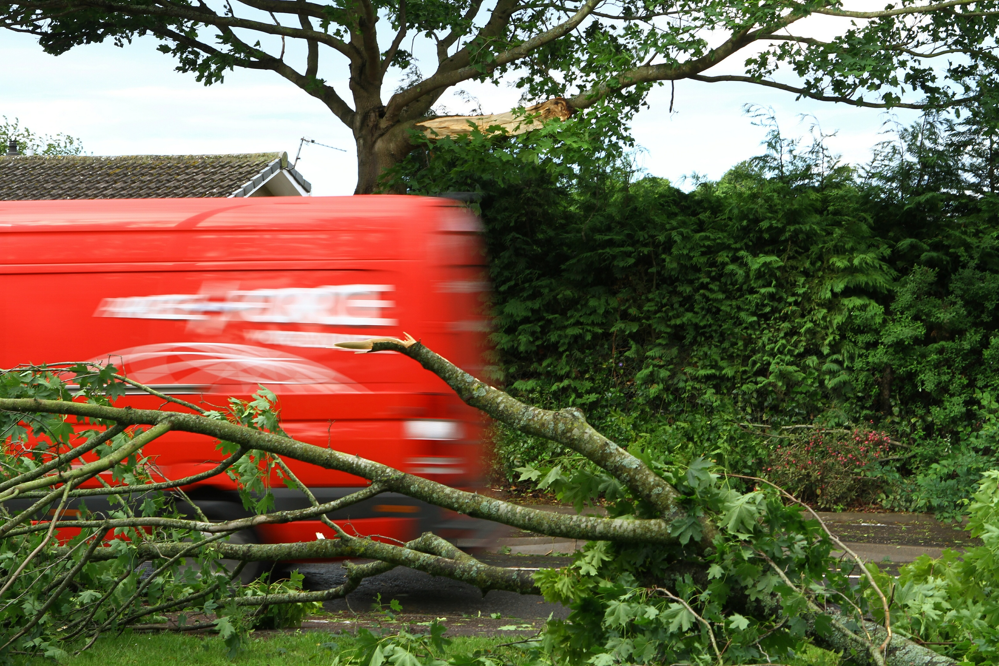 A damaged tree after strong winds at Ashludie, Monifieth