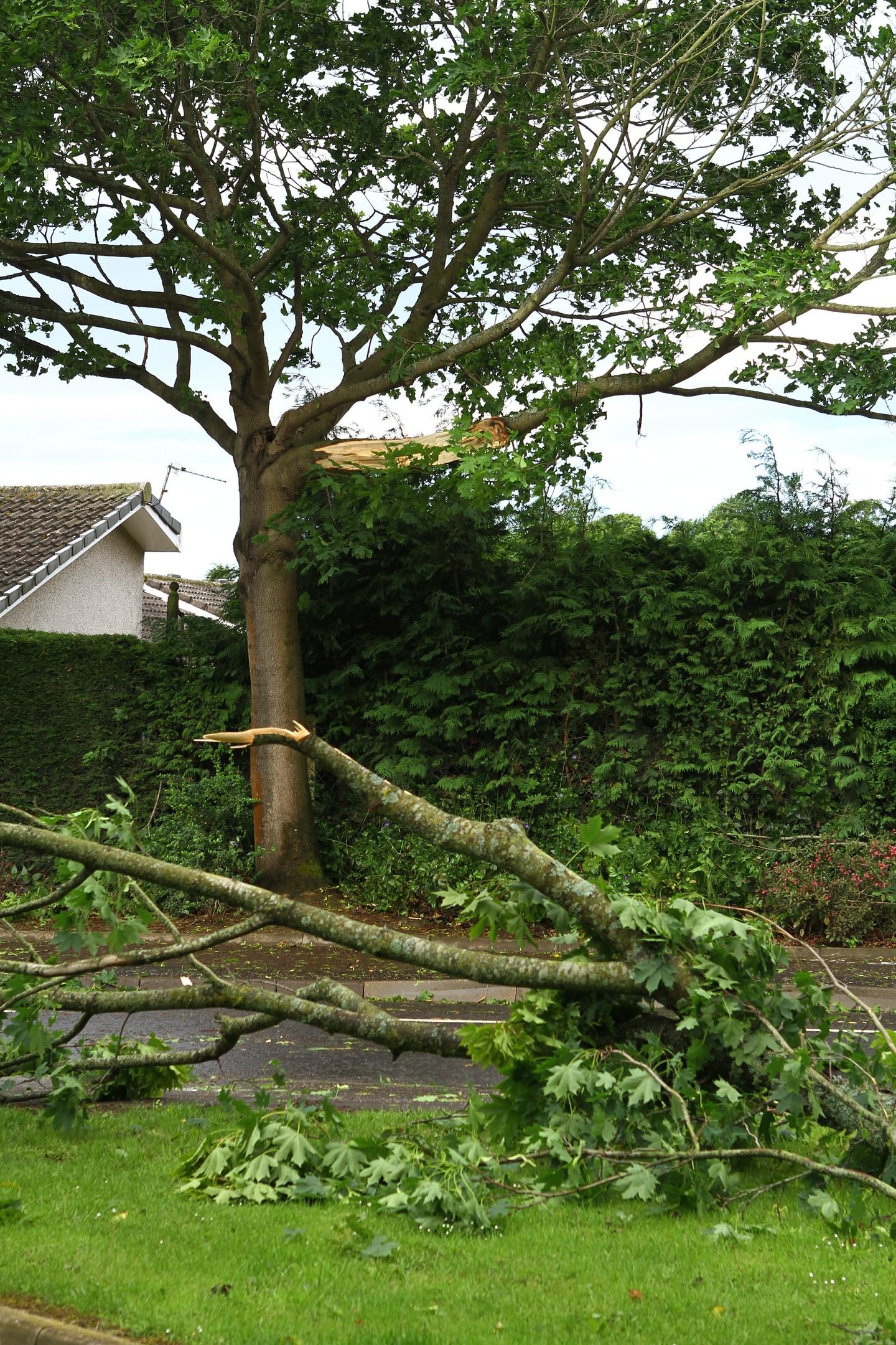 DNic_Damaged_Tree_Monifieth