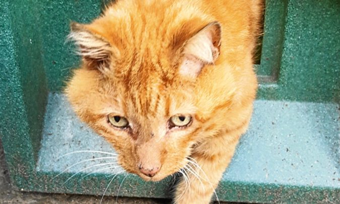 Rusty could not be saved by a vet.