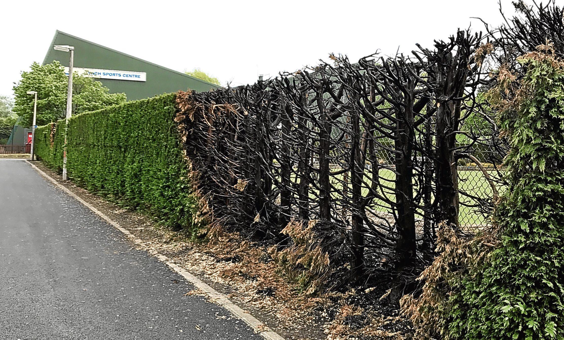 Fire-damaged fence