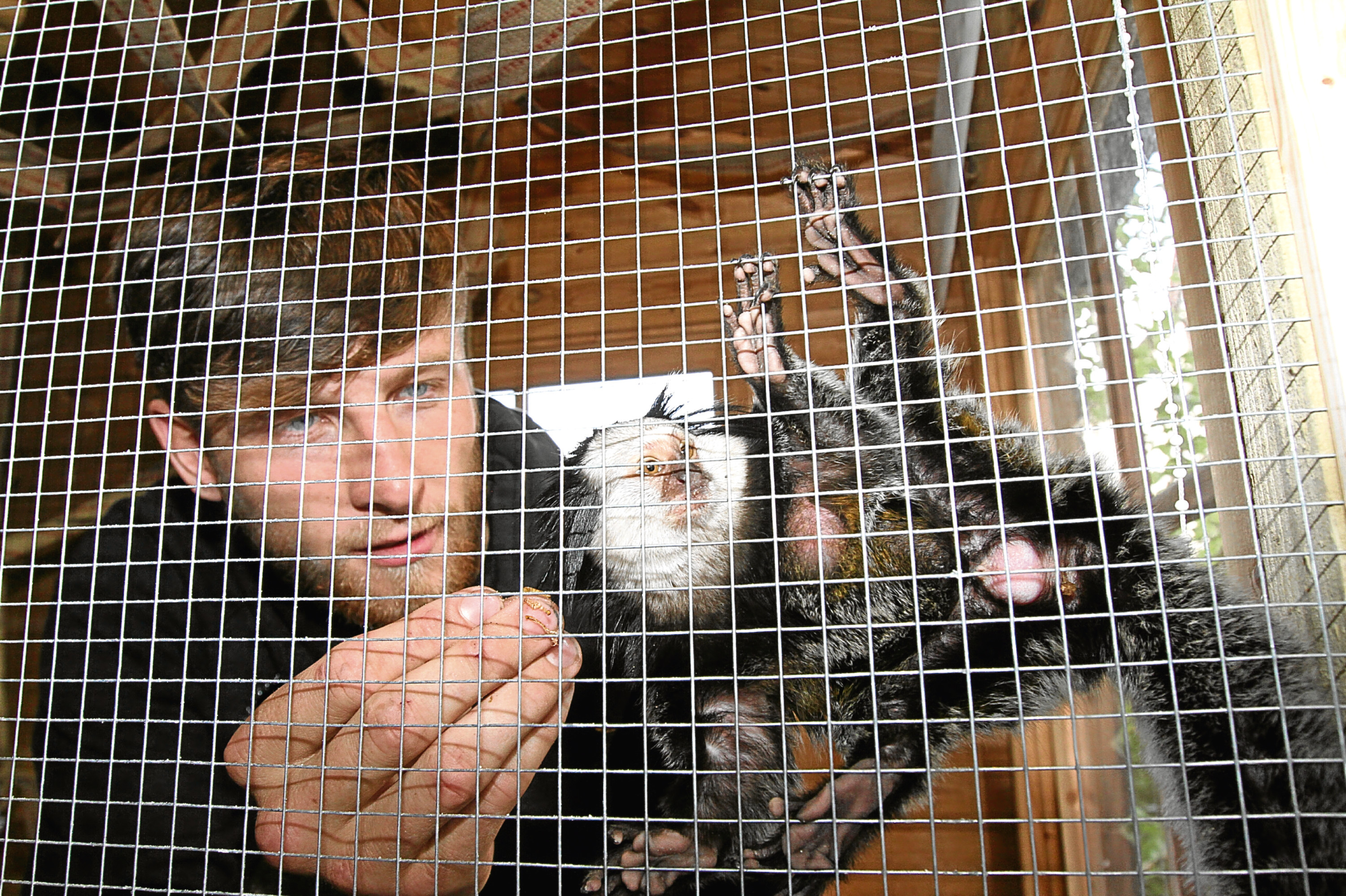 Ryan Dolan feeding his pet monkey George in his enclosure at his Fintry home