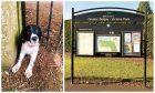 Mario the springer spaniel got himself into a predicament at Victoria Park