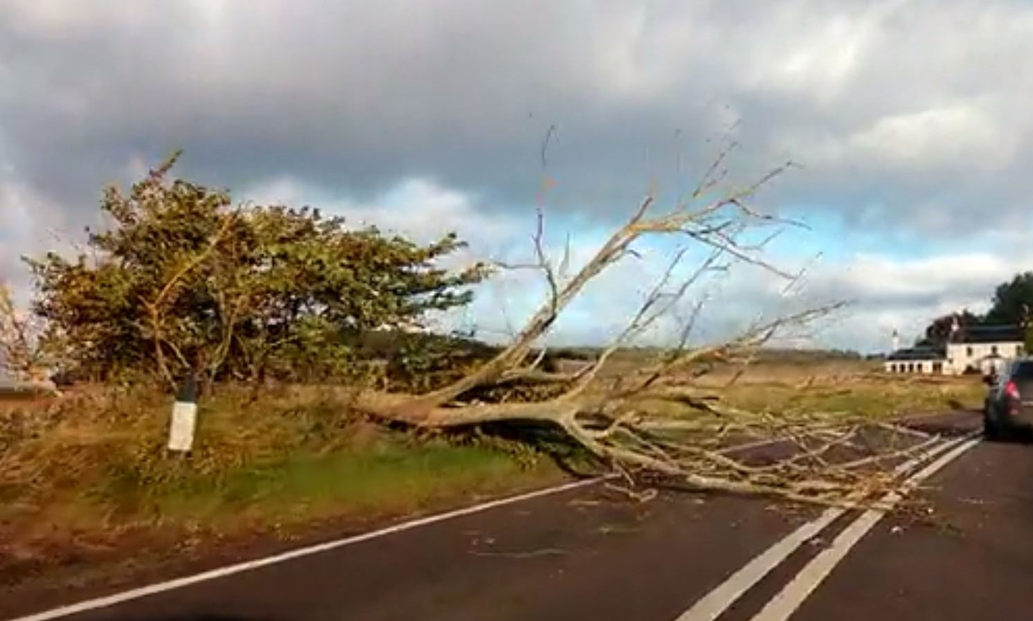 A tree was blown down on the A914 near Drumoig