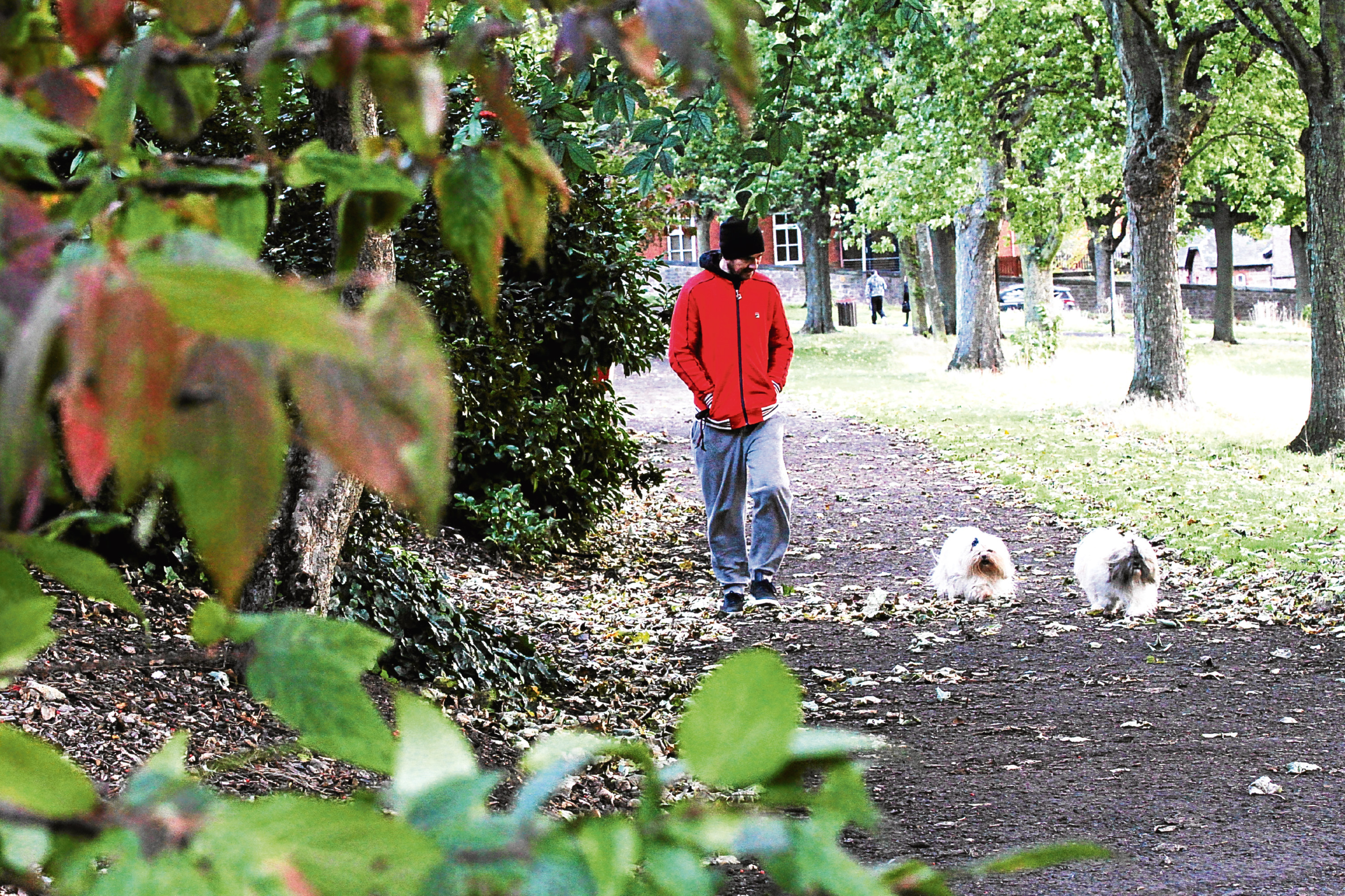 Sean Mitchell, 43, of Dudhope, takes a stroll through the park with his with dogs.