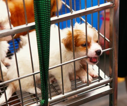 A caged dog for sale. (library picture)