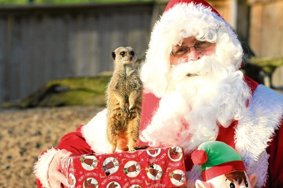 n Picture shows one of the wildlife centre's meerkats introducing himself to Santa.