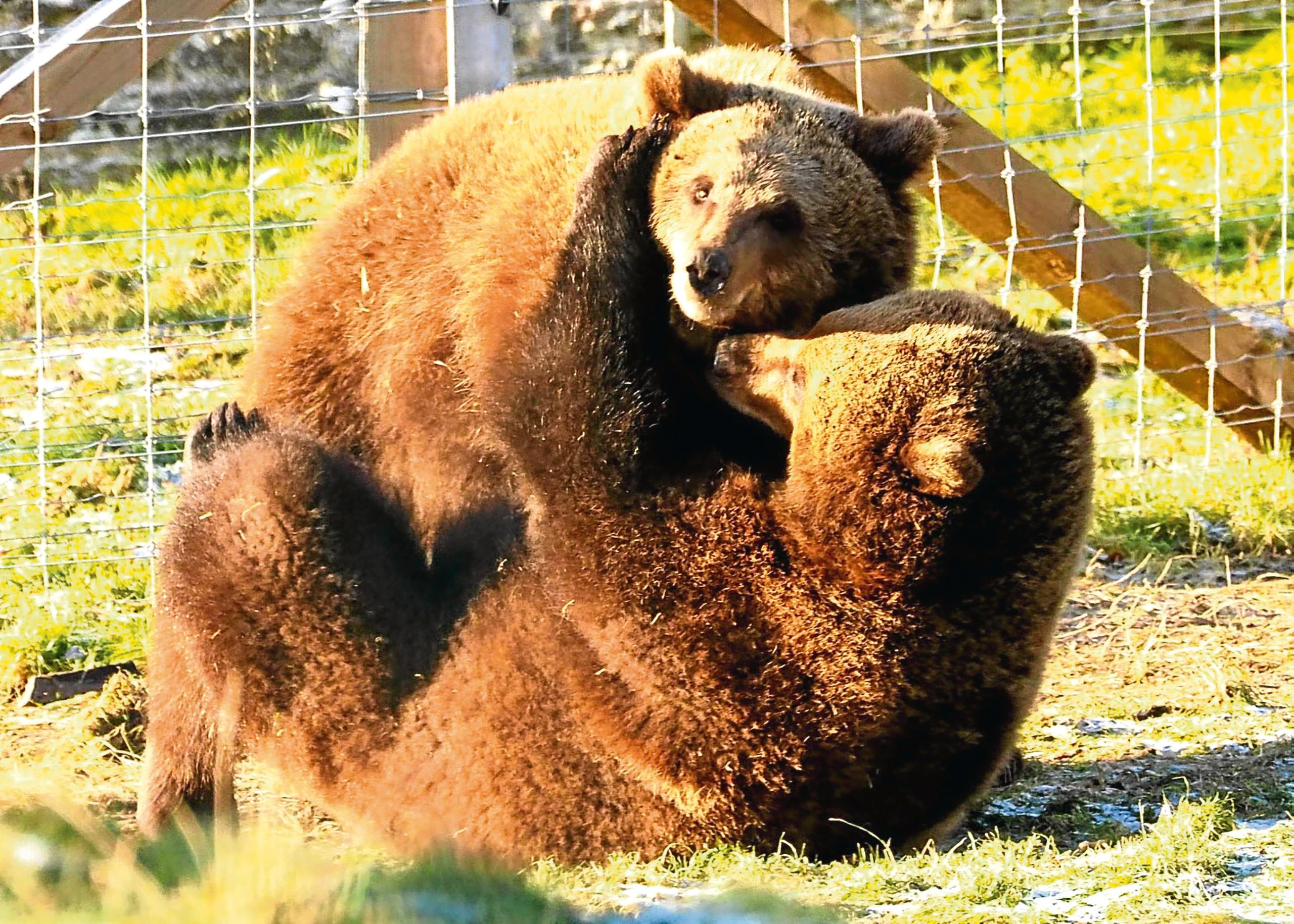 Camperdown Bears taken from Friends of Camperdown Wildlife Centre FB page.