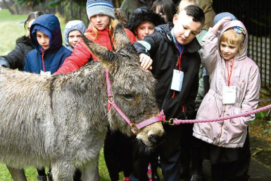 Children greet Esau the donkey on his way to church.