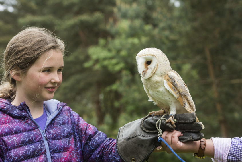 Clarisse Marriott, 10, with a barn owl from Angus Falconry Services.