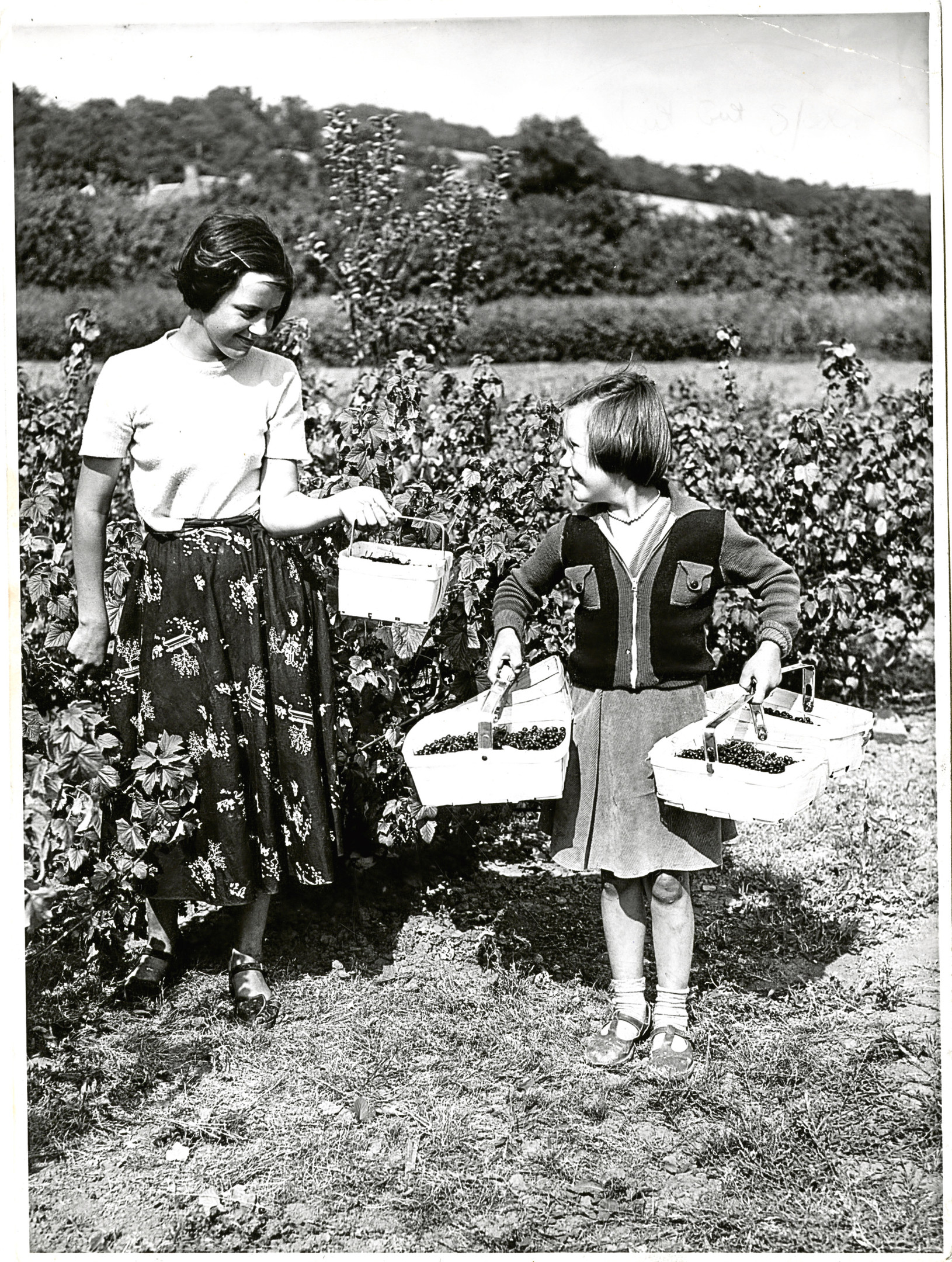 Back in the Day - Saturday 5 May 18 Inchture Berry Pickers. Photograph showing two young girls picking berries at a farm in Inchture. 4 August 1955. E28 1955-08-04 Inchture Berry Pickers (C)DCT Dundonian. Used in Courier 5 August 1955.