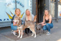 Barmaids Kelsie Boland (21) and Antonia Shearer (22) with dog owner Carly Stevenson with dogs Levi (Husky) and Ollie (Staffordshire Terrier) at Taybridge Bar