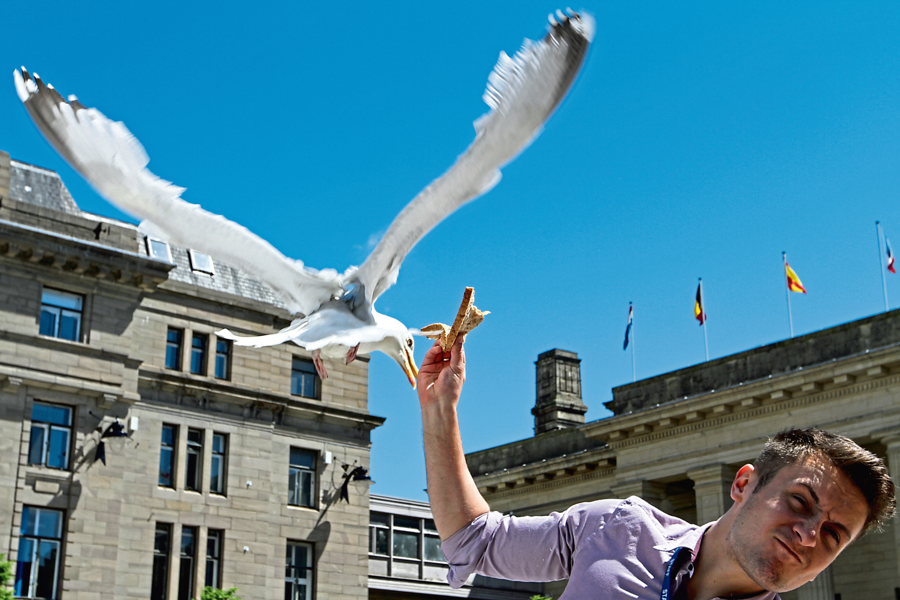 A gull takes food from someone in the city centre.