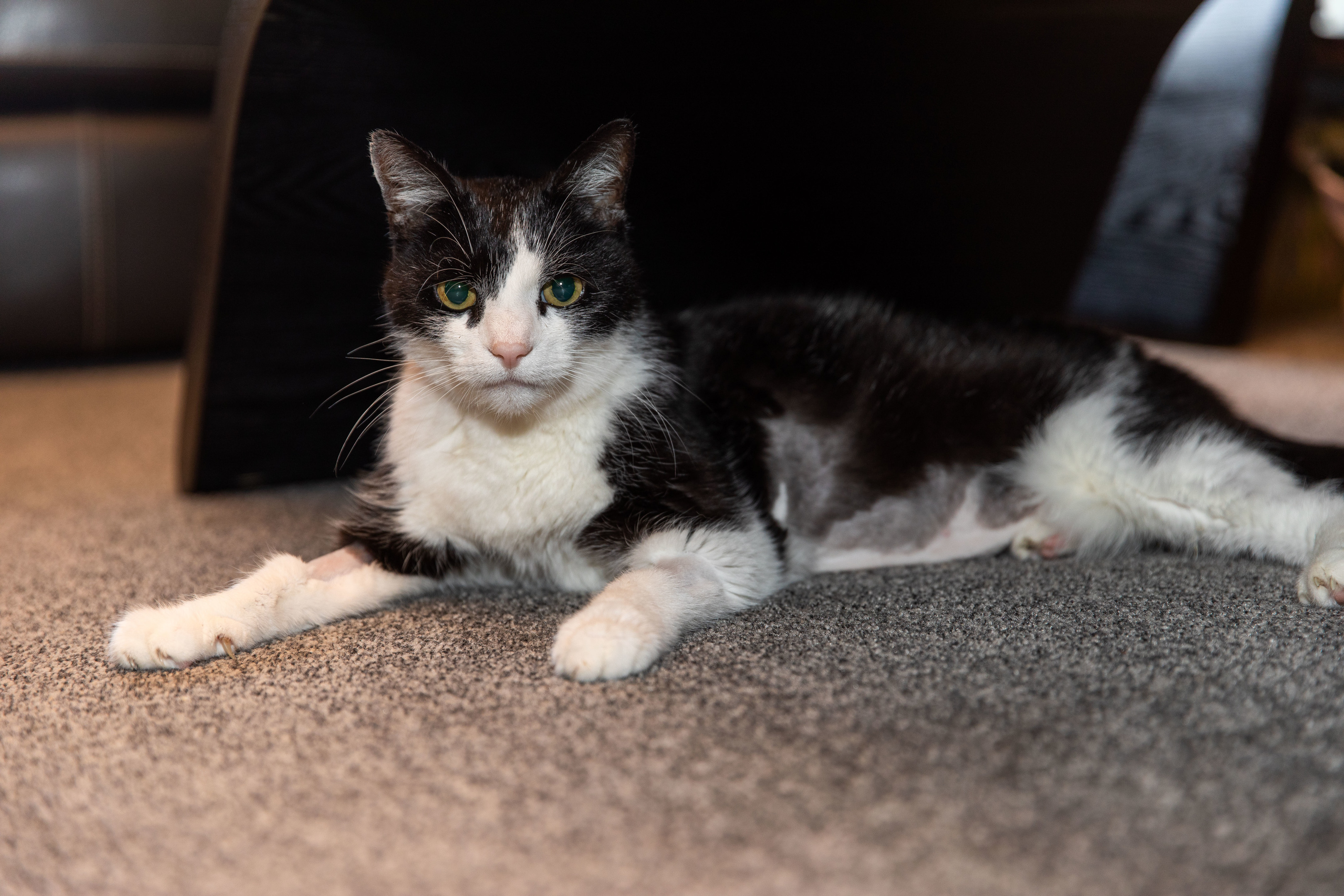 Levi the cat has been put down following his ordeal.