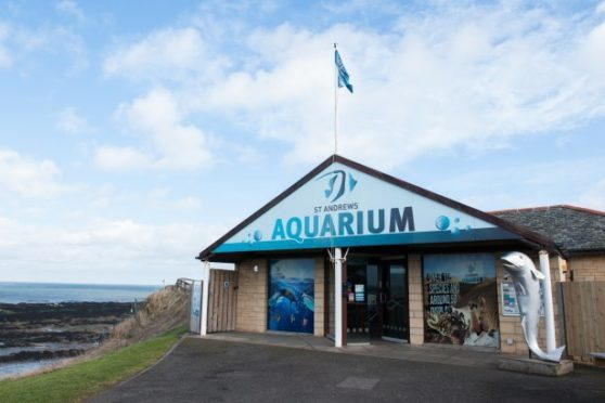 Staff at Feeling Strong will take the group to places such as St Andrews Aquarium.
