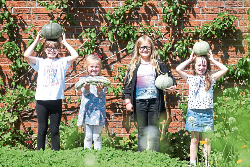 From left, Chloe Hay, 9, Bailey Traill, 5, Kendal Smith, 9, and Ellie Paul, 7, with pumpkins and courgettes.