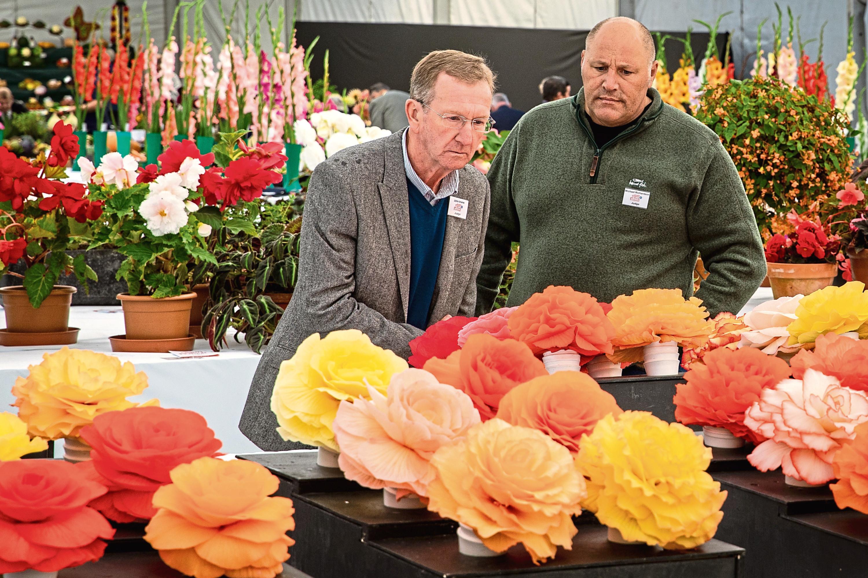 Judges examine the Begonias