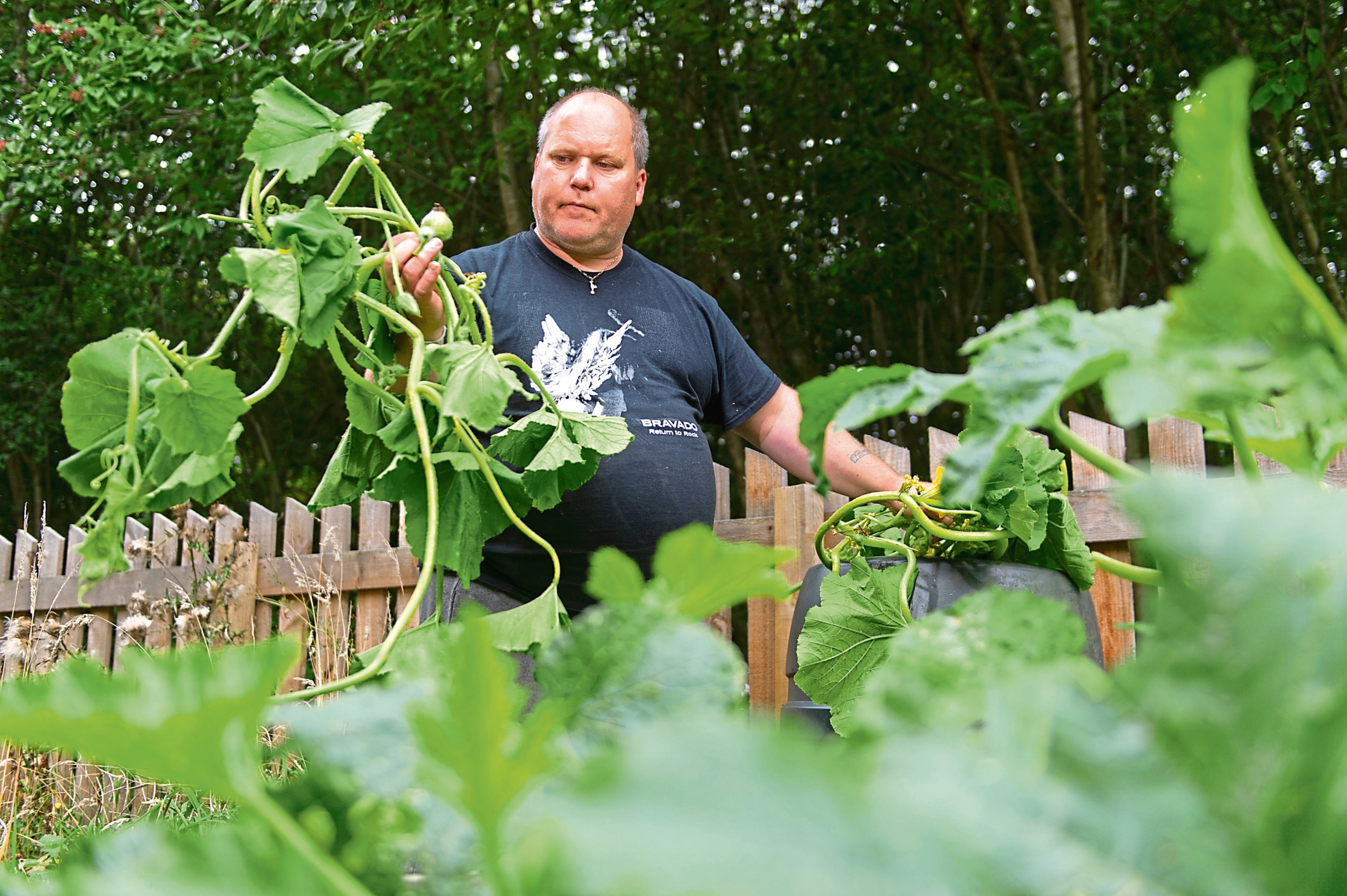 Mick Vine shows the damage done to a crop of pumpkins by vandals at the Whorterbank Community Garden.