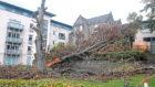 The damaged tree on Shepherd's Loan