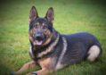 Police dog Wade