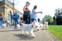 The StobFest Westie Walk will be back for 2019.
