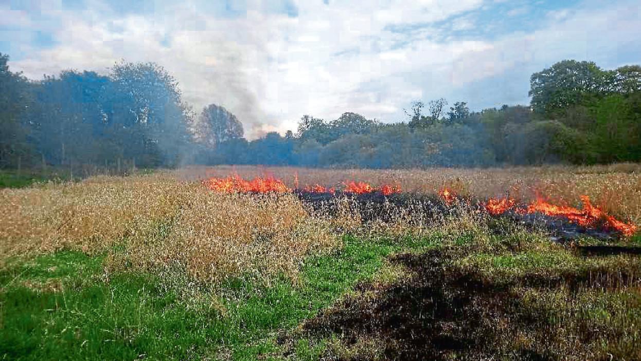 Fire damage at Trottick Ponds.