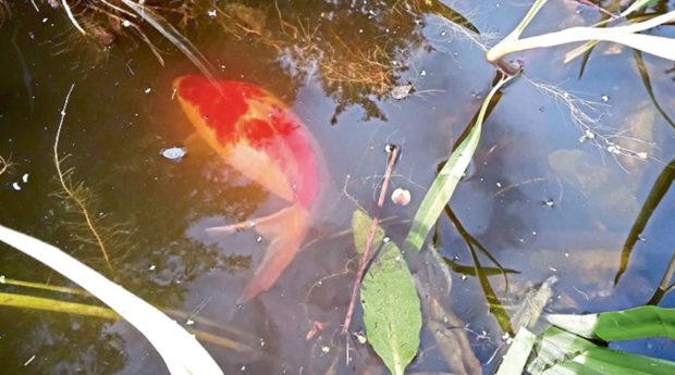 Fish at the Maxwell Centre