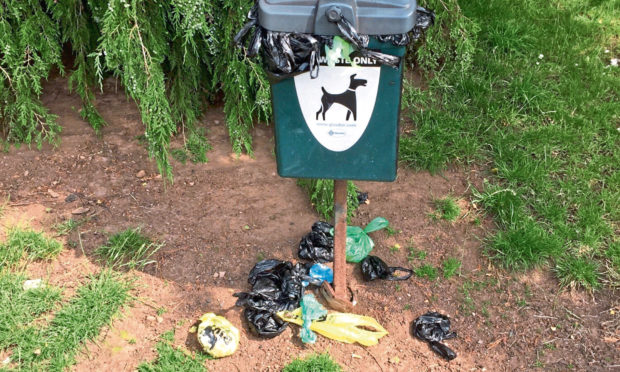 The overflowing dog poo bin at Victoria Park.