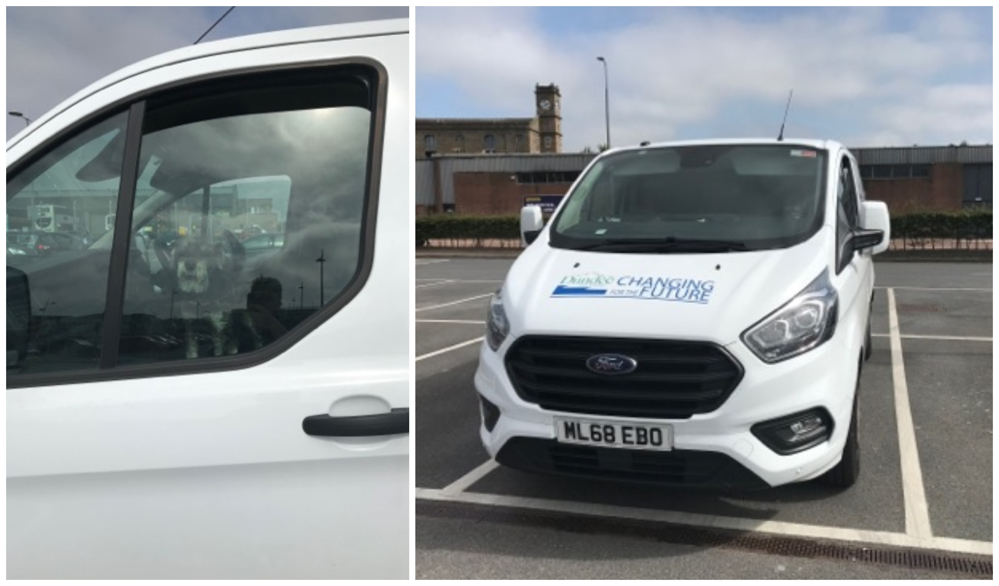 The dogs pictured inside the van parked at Gallagher Retail Park.