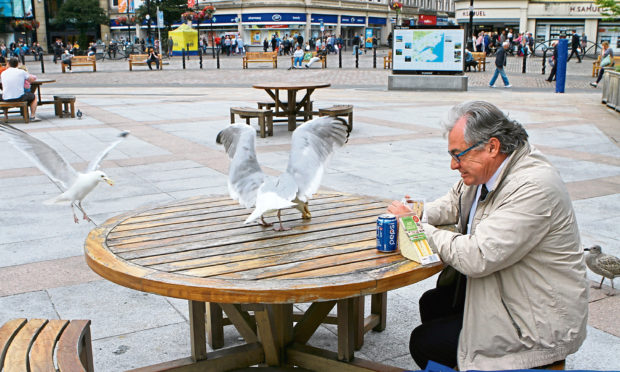 Kenny and the gulls - a battle for the ages.