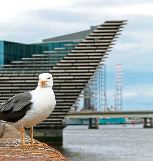 A gull sits close to the V&A.