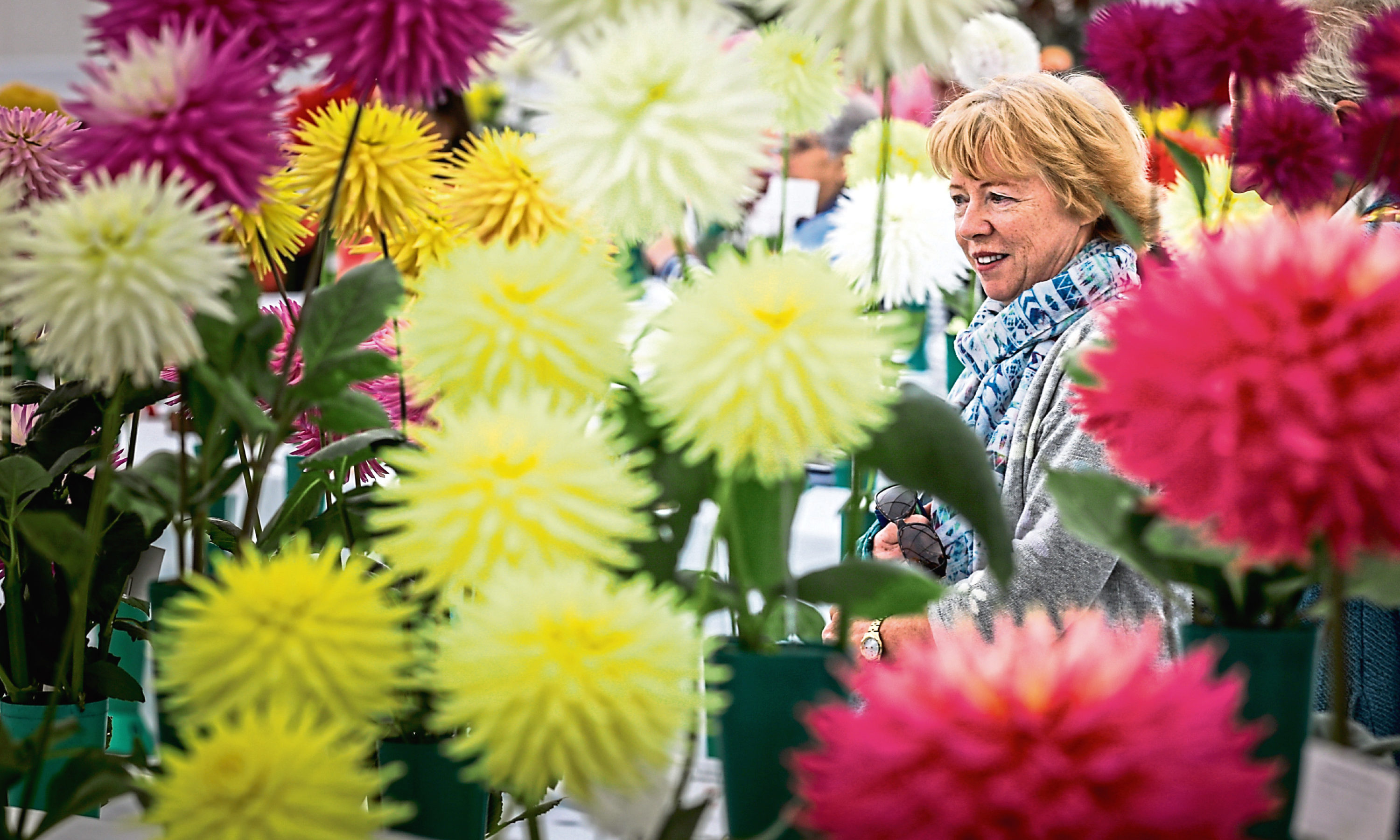 The public admire the flowers that have been submitted for judging.