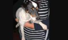 Douglas the Jack Russell - seen here in a photo taken on Tuesday - went missing on Wednesday.