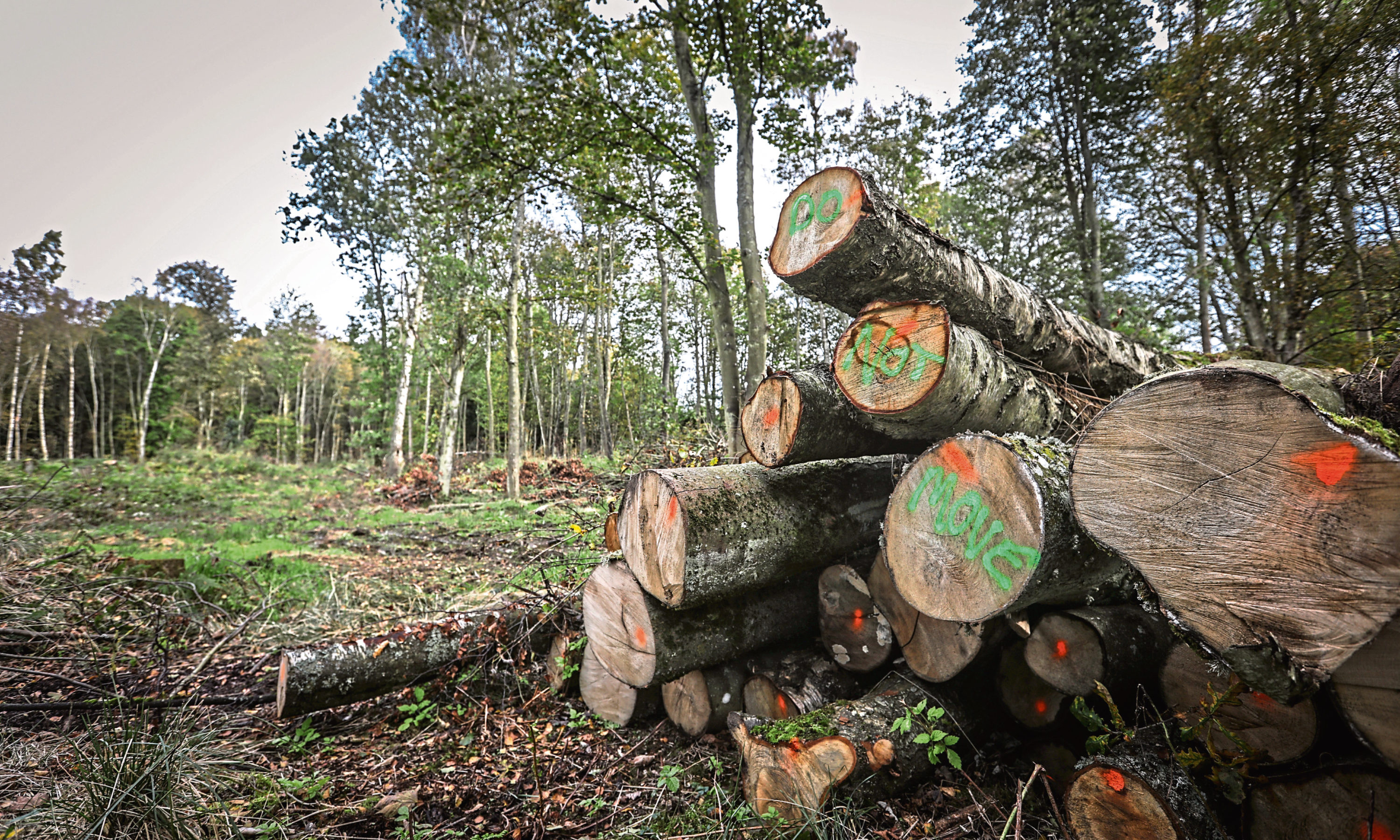 Trees have been cut down at Ardler Wood  at the entrance to Downfield Golf Course.