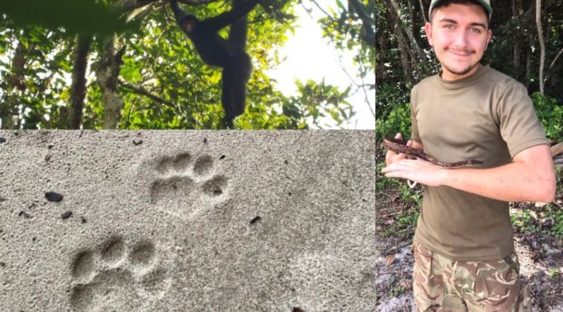 Top left, one of the red-faced spider moneys, below left, the footprints of a male jaguar and, right, Wayne.