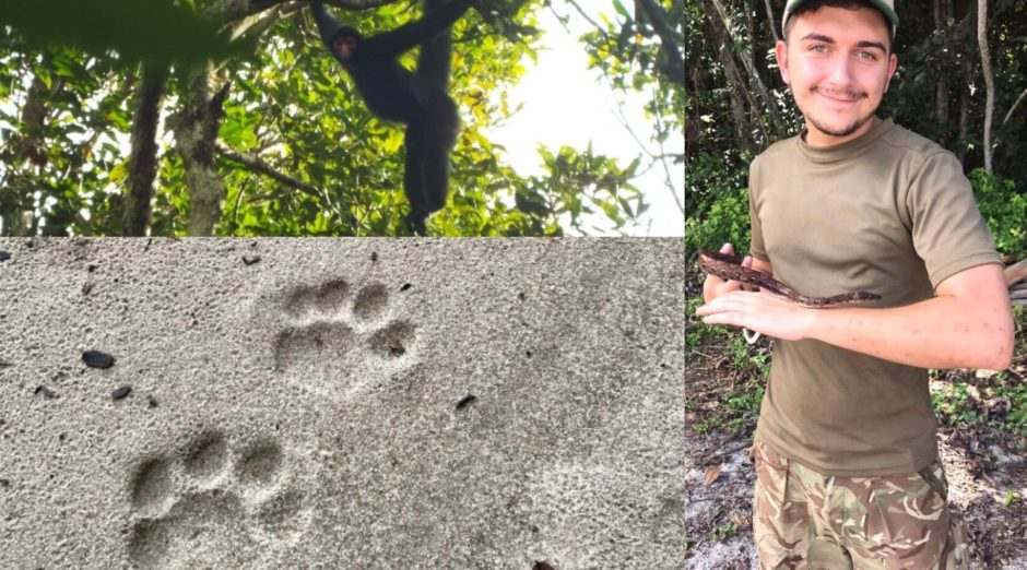 Dundee student's 'amazing' research trip to South American rainforest - Evening Telegraph