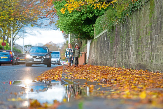 Uncleared fallen leaves on the pavement,