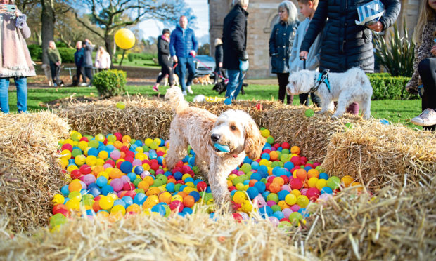 Cockapoo Marvin enjoyed the ball pit at Baxter Park, Dundee.