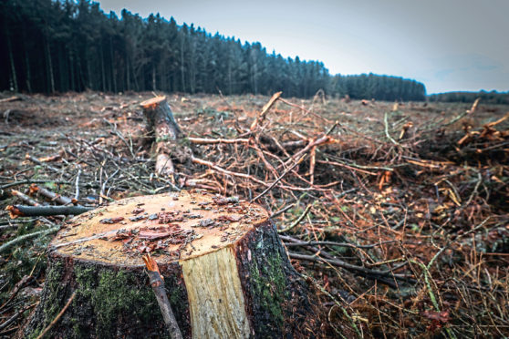The felled trees near Piperdam.