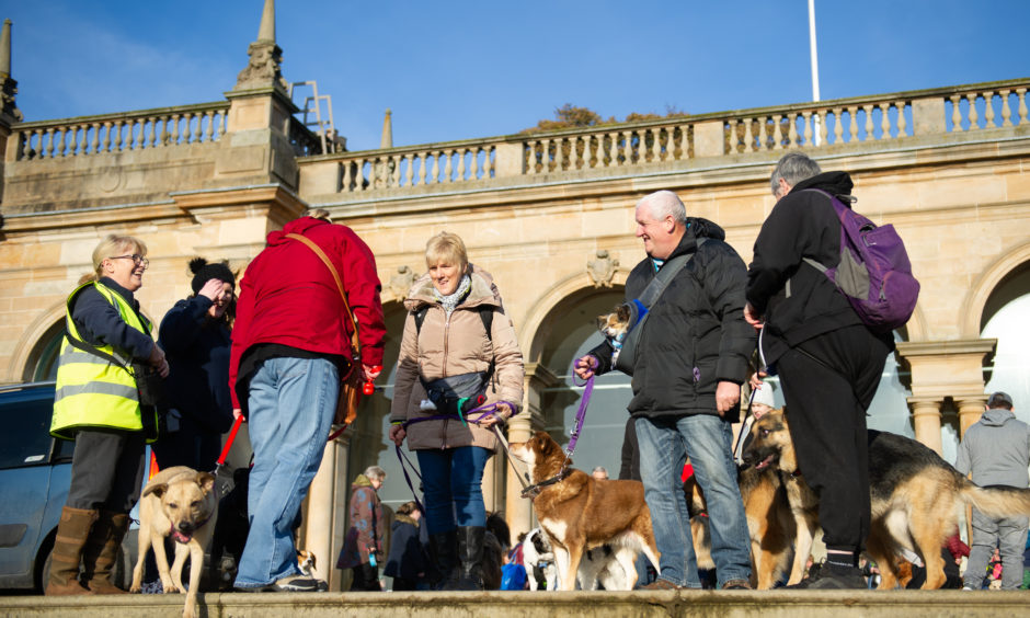 Dogs and their owners enjoying the event.
