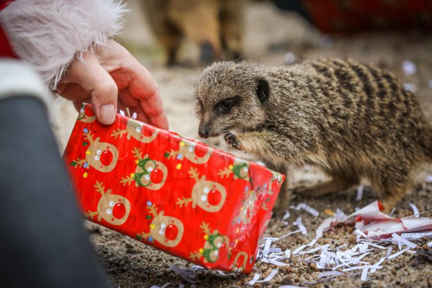 Santa visited the animals in Camperdown Wildlife Centre (Picture: Mhairi Edwards)