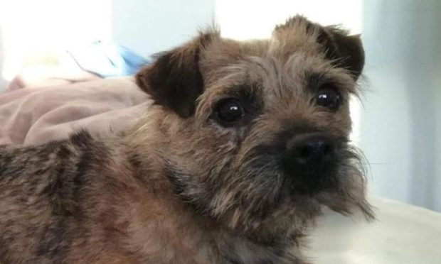 Tilly is missing after falling into the River Tay near Dunkeld Bridge.